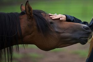 Reiki for animals treating horse